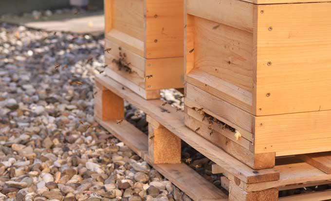 Bienen beim Anflug auf die Bienenstöcke