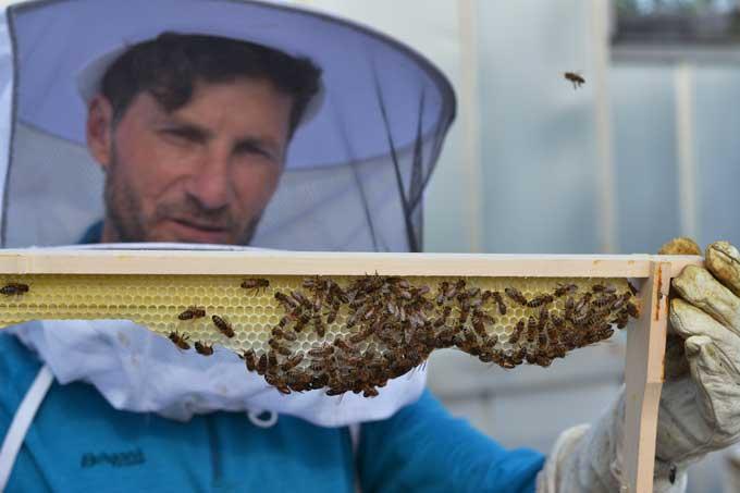 Imker zeigt Rahmen mit Bienen und Waben